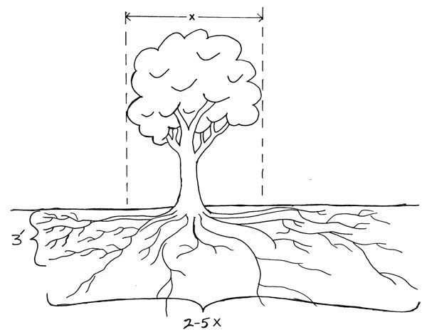 Parts of Trees