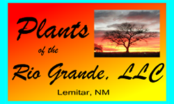 Plants of the Rio Grande