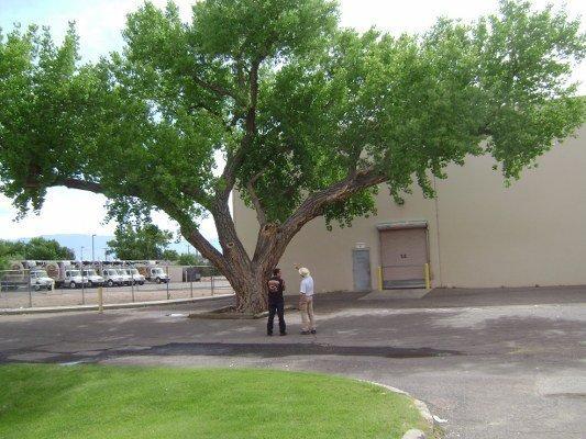 Status-Of-Tree